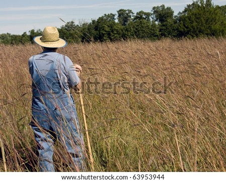 wheat field with farmer standing looking over the grass