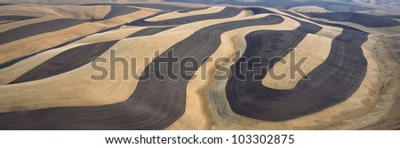 Wheat Fields and Contour Farming, S.E. Washington