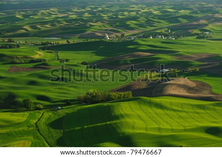 wheat fields at steptoe butte state park, washington, usa