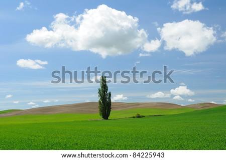 wheat fields in palouse area, washington, usa