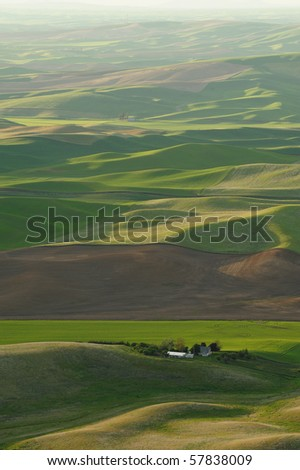 wheat fields in steptoe butte state park, washington, usa