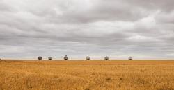 wheat fields near Penong