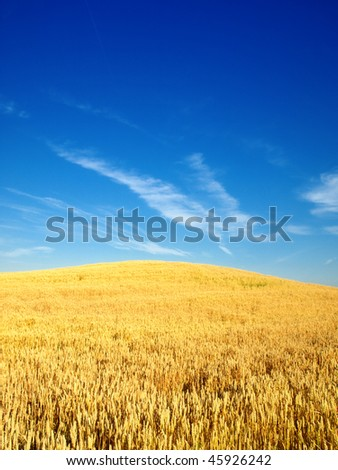 wheat fielf #45926242