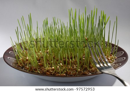 wheat germ in bowl