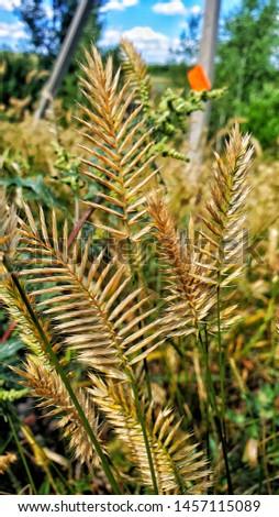 Wheat germ in the village #1457115089