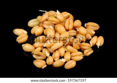 Wheat Germs on Black Background Stock photo ©
