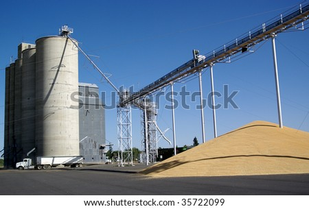 Wheat grain delivery to a collection and storage silo co-op in Washington State.