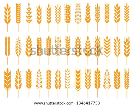 Wheat grain icons. Wheats bread logo, farm grains and rye stalk whole barley foods golden seed. Agriculture harvest crop ear oat field nutrition organic symbol isolated  icon set
