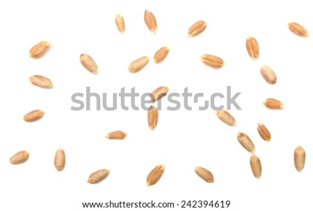 wheat grain isolated on white background #242394619