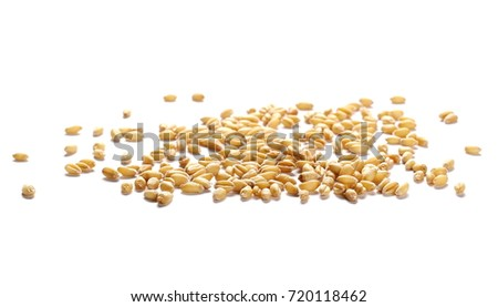 wheat grain isolated on white background #720118462