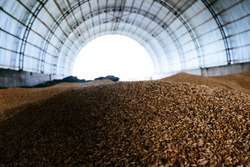 Wheat grain storage in the arched hangar