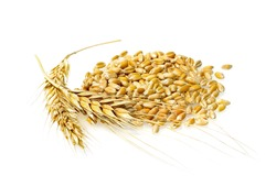 Wheat grains and cereals spike. Wheat  isolated on white background. Wheat ears - close up image.