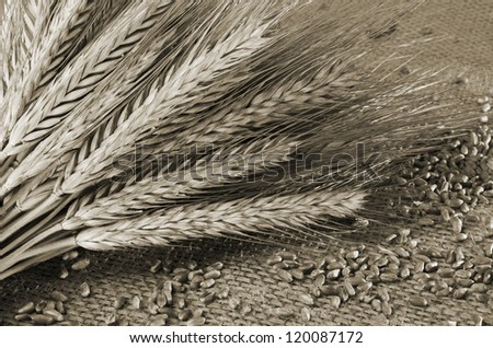 Wheat grains and ears with rustic background