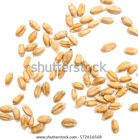wheat grains isolated on white background #572616568