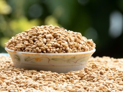 Wheat grains kept on bowl with lots or wheat on ground under sunlight for dry before using for cook.