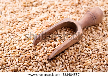 wheat grains with wooden scoop #583484557