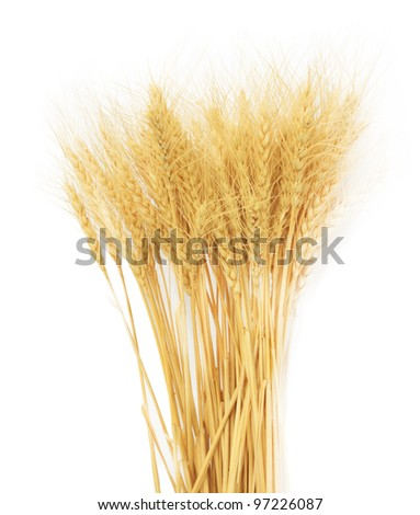 wheat grass isolated over white background