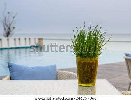 Wheat-grass on the table