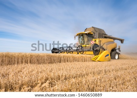 Wheat harvest during the harvest season