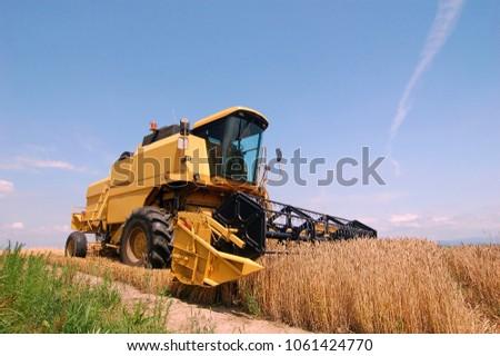 Wheat harvest landscape - Biei, Hokkaido, Japan #1061424770
