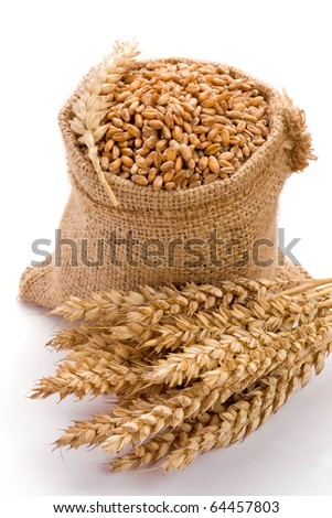 Wheat in burlap sack on white background
