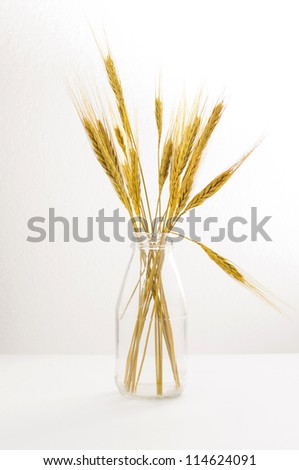 wheat in glass bottle  on  white background
