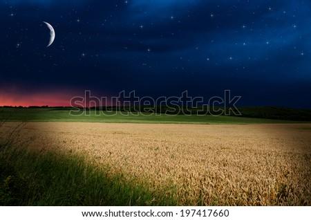 wheat in the night  #197417660