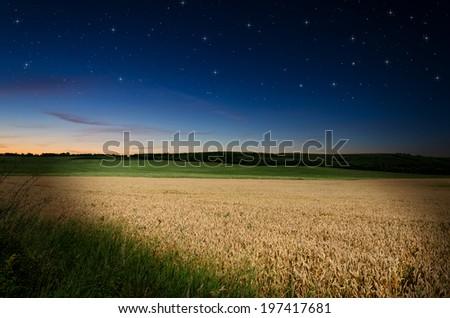 wheat in the night  #197417681