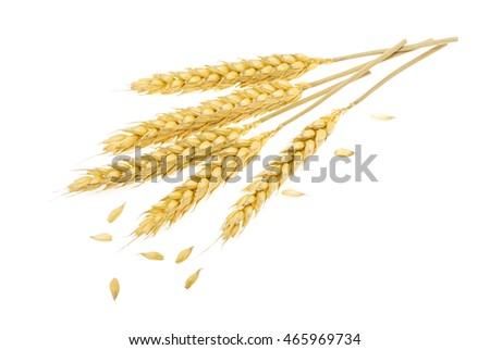 Wheat isolated on white #465969734