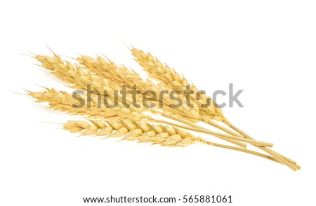 Wheat isolated on white #565881061