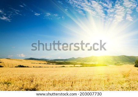 wheat land background #203007730