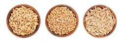 Wheat, oat and barley grains in wooden bowl, isolated on white background. Processed organic dry seeds set. Top view.