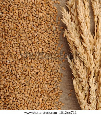 Wheat on sacking background