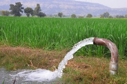 Wheat plants are being irrigated by water jet, a view of Indian farms