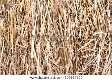 wheat residues background - stock photo