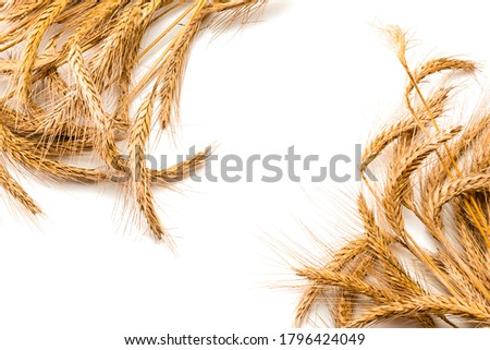 Wheat rye barley oat seeds. Whole, barley, harvest wheat sprouts. Wheat grain ear or rye spike plant isolated on white background, for cereal bread flour. Top view, cutout. Сток-фото ©