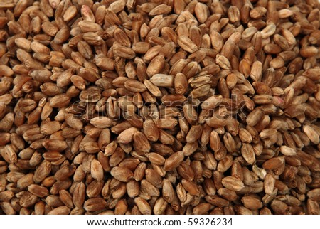 wheat seeds close up as background