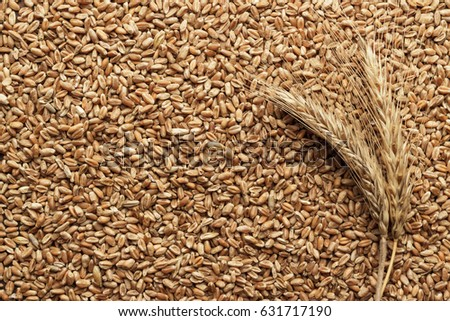 wheat seeds for sprouting on the table #631717190
