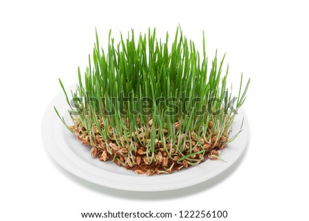 Wheat seeds with green sprouts over white background with clipping paths