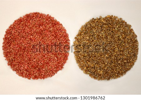 Wheat seeds with red seed dressing or seed treatment and seeds without seed dressing .  Plant protection.  Cereal protection