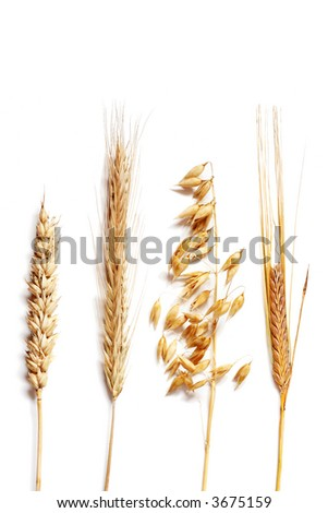 Wheat selection