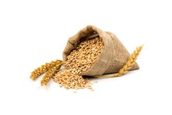 wheat spike and grain in a baggy bag, isolated on a white background. the concept of harvest