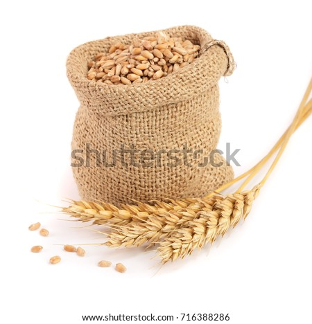 wheat spike and wheat grain in burlap bag isolated on white background