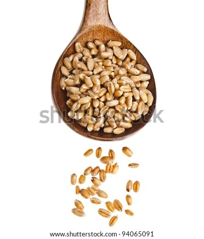 wheat sprout in wooden spoon  Isolated on white background