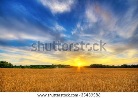 Wheat sunset