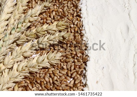 wheat, wheat grains and wheat flour