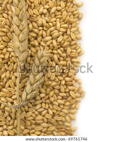 wheat with the place for your text