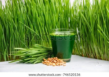 Wheatgrass shot. Juice from wheat grass. Trend of health. wheat grass
