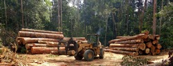 wheel loader tidying the piles of wood logs extracted from the region of Amazonian forest in Brazil