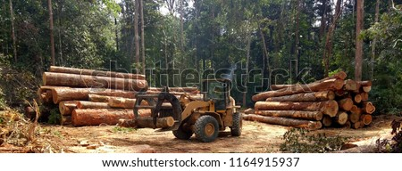 wheel loader tidying the piles of wood logs extracted from the region of Amazonian forest in Brazil ストックフォト ©